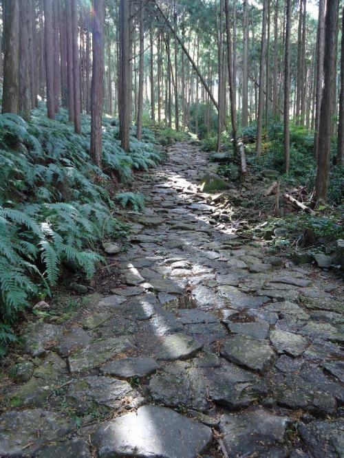 苔むしていた石畳も熊野古道が世界遺産に指定されて以降は歩く人が増えて剥がれてしまったのだという