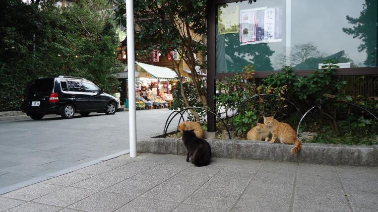 おはらい町の入口にいた猫たち