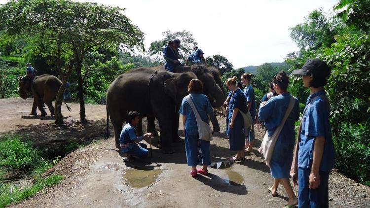 柵なしでこれほど象に近寄ることすら初めて同然なのにいきなりの試乗会