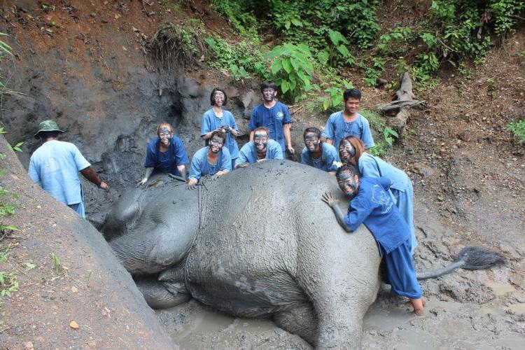 黒泥スパに巨体を横たえて気持よさそうに体をゴシゴシされる象と一緒に記念撮影 これなら顔出しOK(笑
