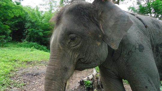 僕を乗せてくれた象さん ありがとう