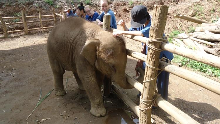 人懐こい小僧もとい子象がトレッキングの疲れを癒してくれた