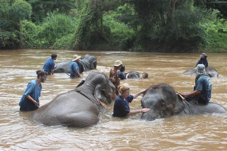 沐浴タイム 川底に体を横たえた象の泥を洗い落とす 象は鼻シャワーや鼻リフトで参加者を楽しませてくれる