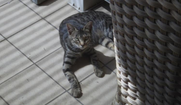 朝食を食べに来た野良猫はひなたぼっこ中