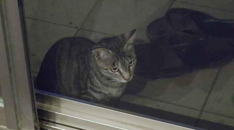 帰宅して窓のスクリーンを上げると夕食を食べにきたちびちゃんがいた